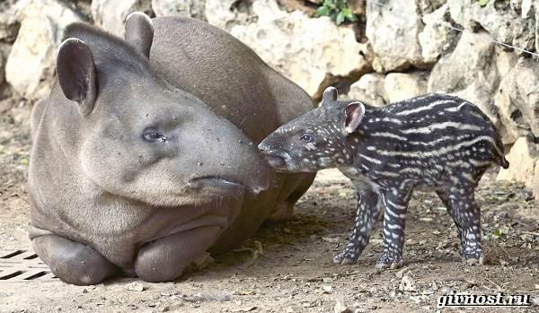 Животные-тропического-леса-Описание-названия-и-особенности-животных-тропического-леса-3