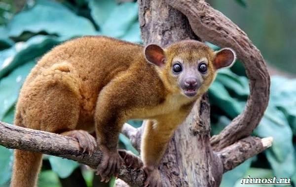 Животные-тропического-леса-Описание-названия-и-особенности-животных-тропического-леса-30