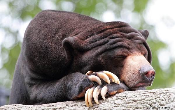 Животные-тропического-леса-Описание-названия-и-особенности-животных-тропического-леса-32