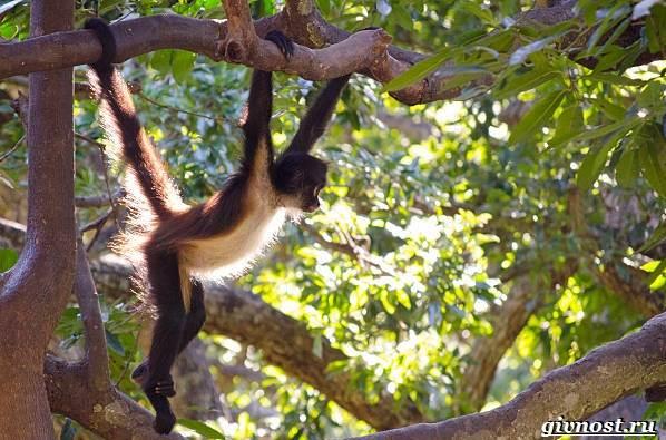 Животные-тропического-леса-Описание-названия-и-особенности-животных-тропического-леса-35