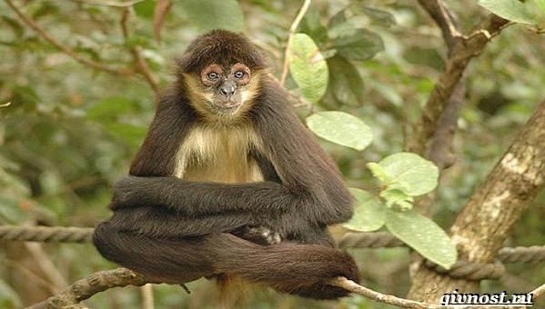Животные-тропического-леса-Описание-названия-и-особенности-животных-тропического-леса-36