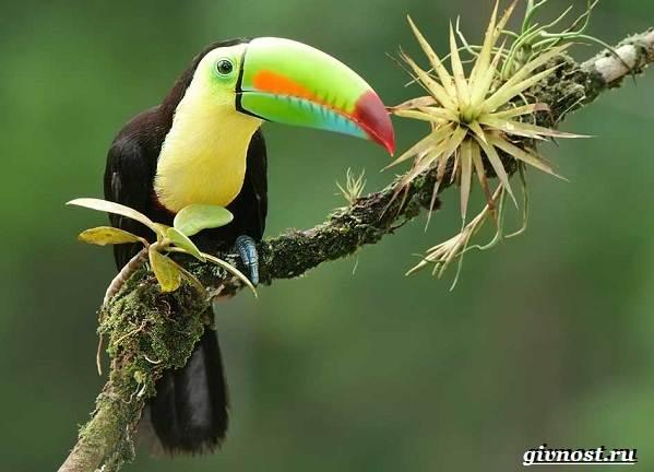 Животные-тропического-леса-Описание-названия-и-особенности-животных-тропического-леса-38