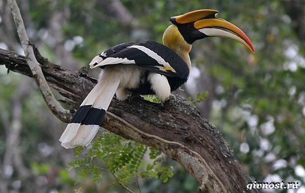 Животные-тропического-леса-Описание-названия-и-особенности-животных-тропического-леса-40