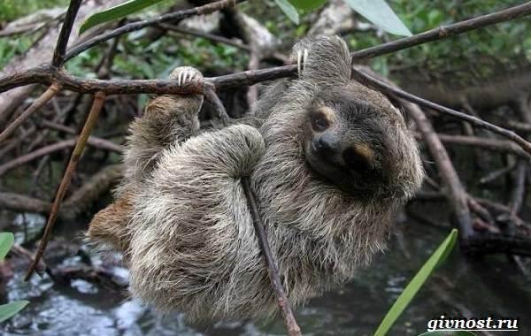 Животные-тропического-леса-Описание-названия-и-особенности-животных-тропического-леса-41