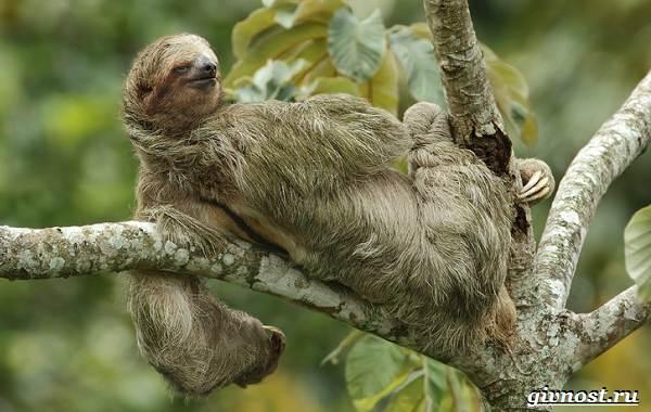 Животные-тропического-леса-Описание-названия-и-особенности-животных-тропического-леса-42