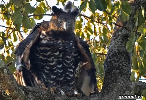 Животные-тропического-леса-Описание-названия-и-особенности-животных-тропического-леса-43