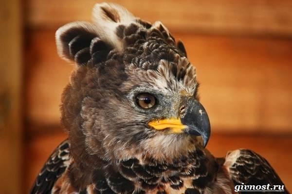 Животные-тропического-леса-Описание-названия-и-особенности-животных-тропического-леса-44
