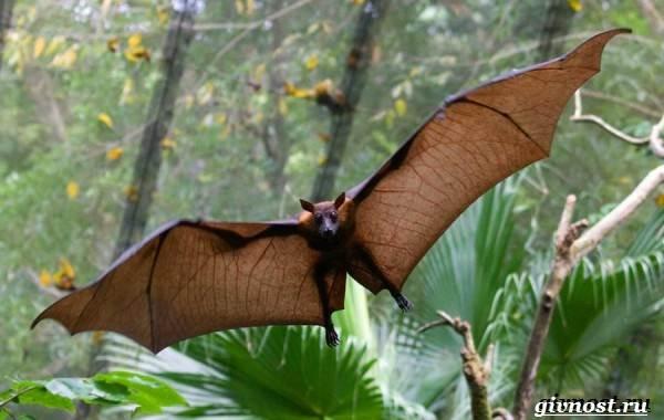 Животные-тропического-леса-Описание-названия-и-особенности-животных-тропического-леса-46