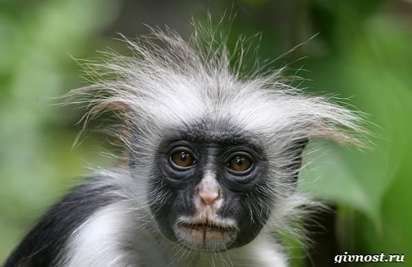 Животные-тропического-леса-Описание-названия-и-особенности-животных-тропического-леса-47