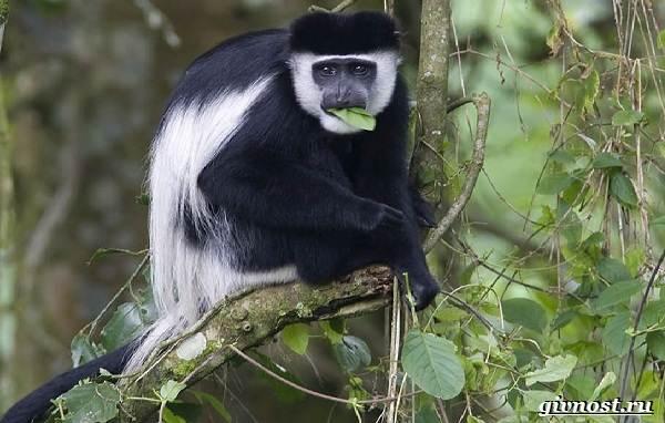 Животные-тропического-леса-Описание-названия-и-особенности-животных-тропического-леса-48