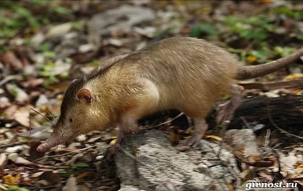 Животные-тропического-леса-Описание-названия-и-особенности-животных-тропического-леса-7