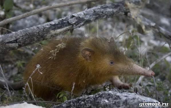 Животные-тропического-леса-Описание-названия-и-особенности-животных-тропического-леса-8