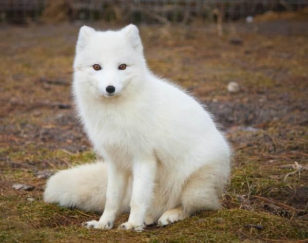 Животные-Урала-Описание-названия-и-виды-животных-Урала-2