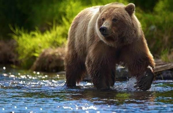 Животные-Урала-Описание-названия-и-виды-животных-Урала-5