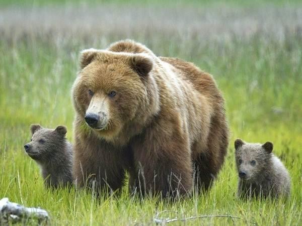 Животные-Урала-Описание-названия-и-виды-животных-Урала-6