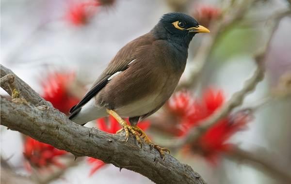 Птица-скворец-Образ-жизни-и-среда-обитания-скворца-14