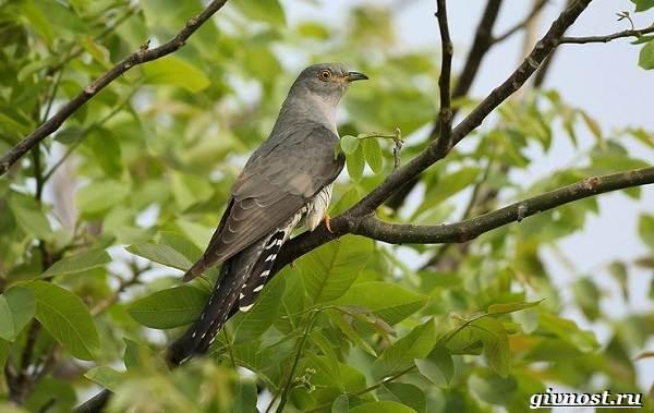 Птицы-Сибири-Описания-названия-и-особенности-птиц-Сибири-10