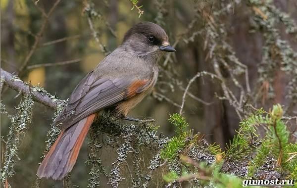Птицы-Сибири-Описания-названия-и-особенности-птиц-Сибири-16