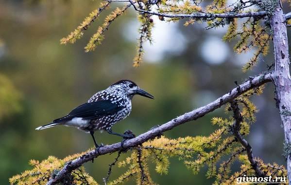 Птицы-Сибири-Описания-названия-и-особенности-птиц-Сибири-17