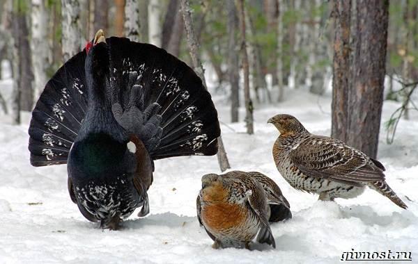 Птицы-Сибири-Описания-названия-и-особенности-птиц-Сибири-2