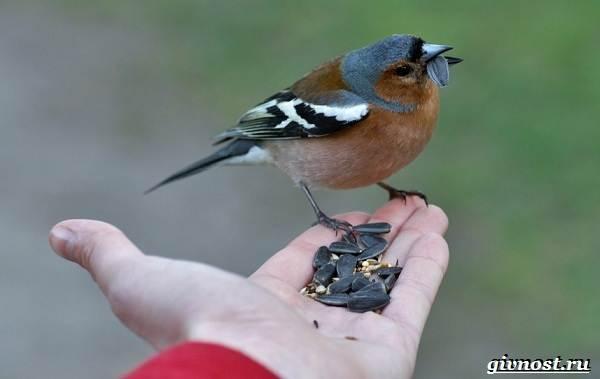 Птицы-Сибири-Описания-названия-и-особенности-птиц-Сибири-20