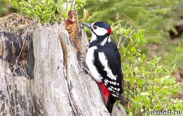 Птицы-Сибири-Описания-названия-и-особенности-птиц-Сибири-22