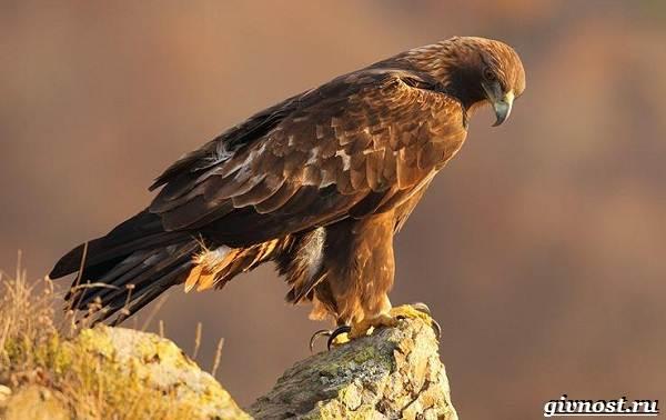 Птицы-Сибири-Описания-названия-и-особенности-птиц-Сибири-31