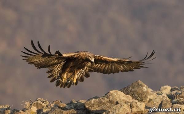 Птицы-Сибири-Описания-названия-и-особенности-птиц-Сибири-32
