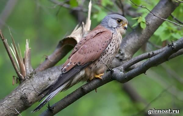 Птицы-Сибири-Описания-названия-и-особенности-птиц-Сибири-34