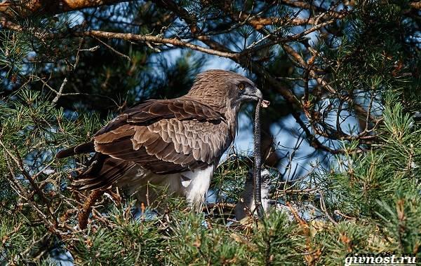 Птицы-Сибири-Описания-названия-и-особенности-птиц-Сибири-35