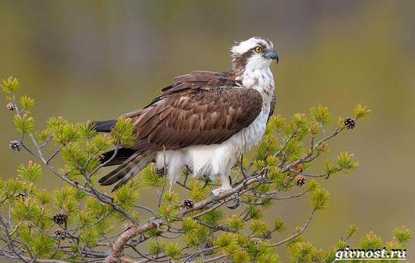 Птицы-Сибири-Описания-названия-и-особенности-птиц-Сибири-36