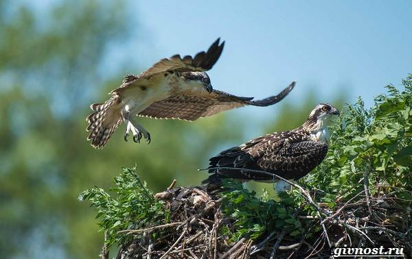 Птицы-Сибири-Описания-названия-и-особенности-птиц-Сибири-37