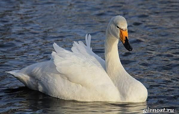 Птицы-Сибири-Описания-названия-и-особенности-птиц-Сибири-38