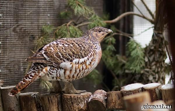 Птицы-Сибири-Описания-названия-и-особенности-птиц-Сибири-4