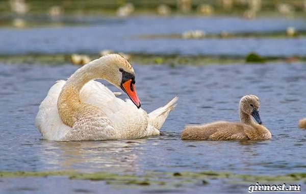 Птицы-Сибири-Описания-названия-и-особенности-птиц-Сибири-42