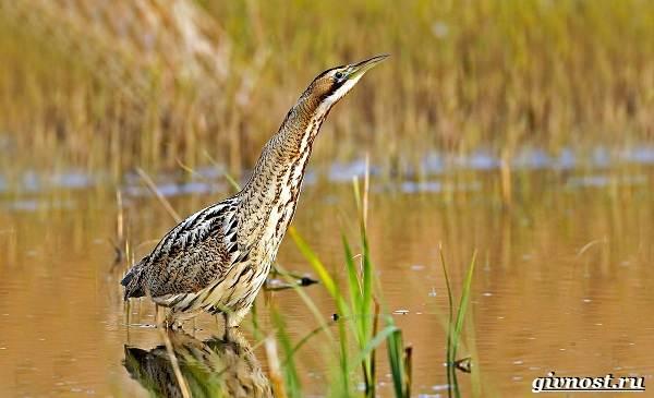 Птицы-Сибири-Описания-названия-и-особенности-птиц-Сибири-49