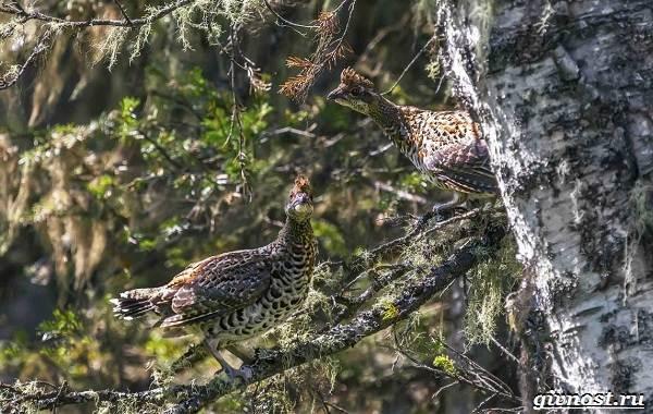 Птицы-Сибири-Описания-названия-и-особенности-птиц-Сибири-6