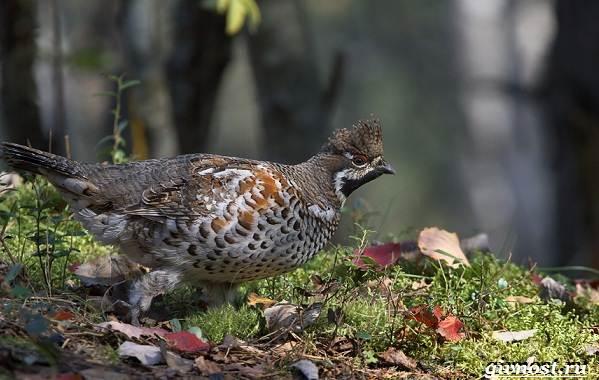 Птицы-Сибири-Описания-названия-и-особенности-птиц-Сибири-7