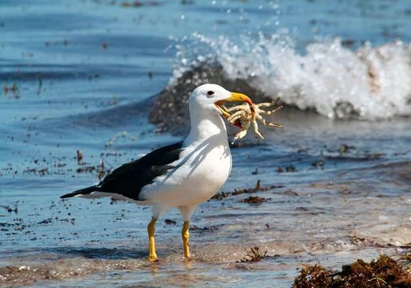 Альбатрос-птица-Описание-особенности-образ-жизни-и-среда-обитания-альбатроса-4