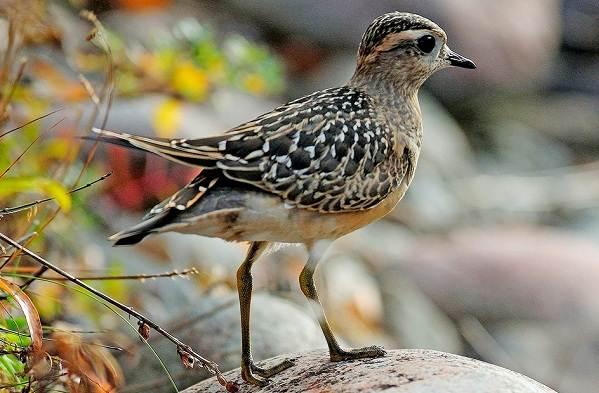 Кулик-птица-Образ-жизни-и-среда-обитания-кулика-17