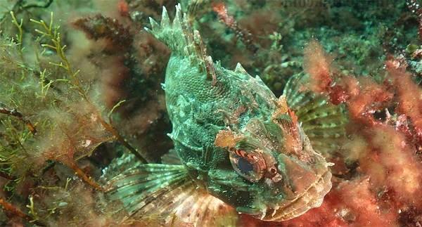 Рыбы-черного-моря-Названия-описания-и-особенности-рыб-черного-моря-24