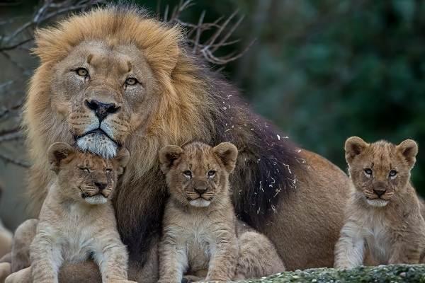 Животные-саванны-Описания-названия-и-особенности-животных-саванны-11