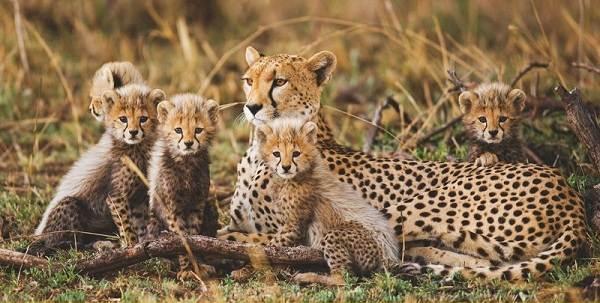 Животные-саванны-Описания-названия-и-особенности-животных-саванны-17