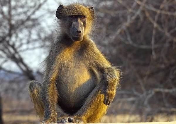 Животные-саванны-Описания-названия-и-особенности-животных-саванны-24