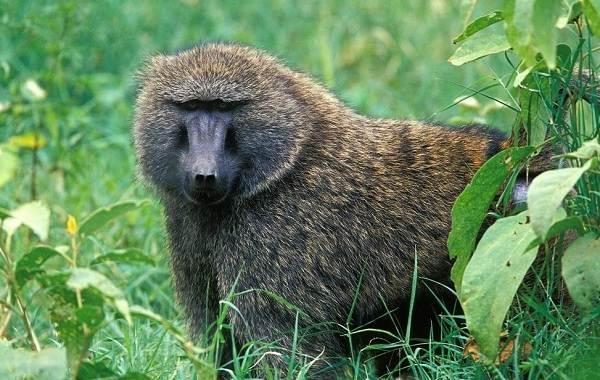 Животные-саванны-Описания-названия-и-особенности-животных-саванны-25