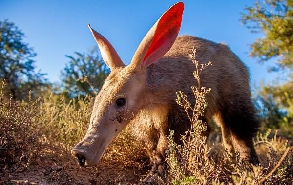 Животные-саванны-Описания-названия-и-особенности-животных-саванны-33