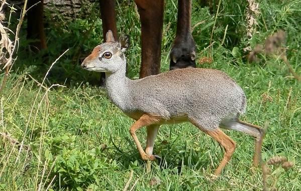 Животные-саванны-Описания-названия-и-особенности-животных-саванны-37