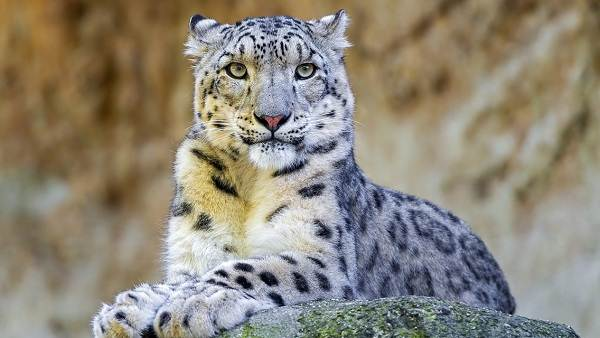 Животные-Татарстана-Описание-названия-и-особенности-животных-Татарстана-24
