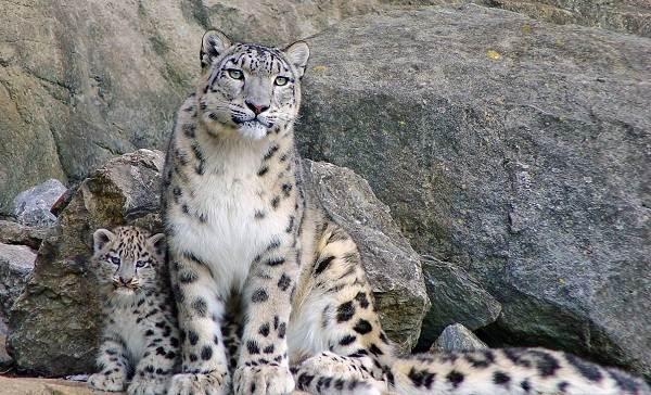 Животные-Татарстана-Описание-названия-и-особенности-животных-Татарстана-25