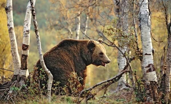 Животные-Татарстана-Описание-названия-и-особенности-животных-Татарстана-26